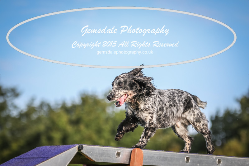 Southdowns Agility 25th September 2016-2038