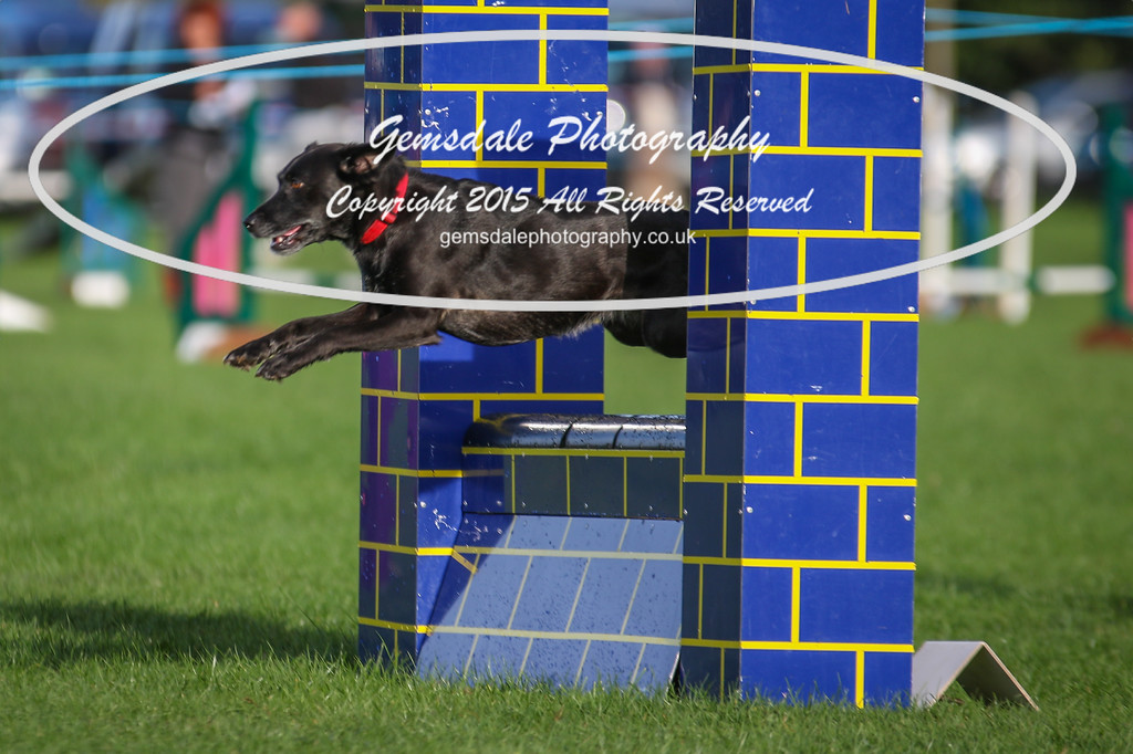 Southdowns Agility 25th September 2016-2043
