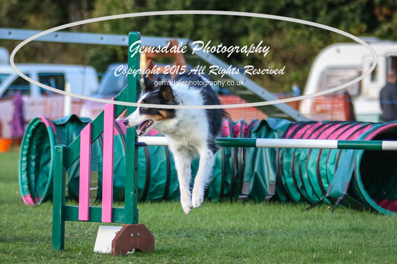 Southdowns Agility 25th September 2016-3077