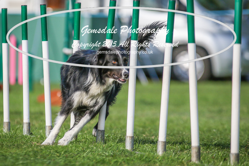 Southdowns Agility 25th September 2016-3078
