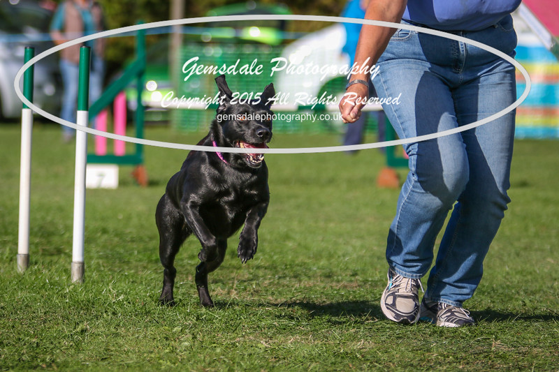 Southdowns Agility 25th September 2016-3063