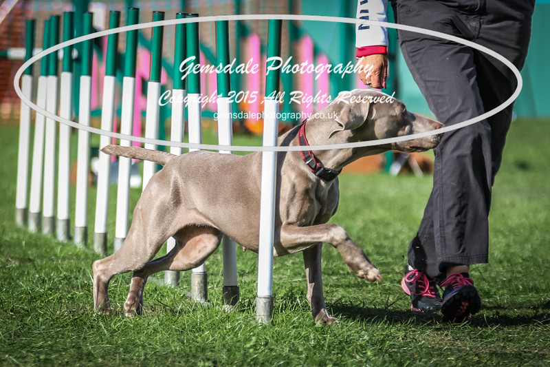 Southdowns Agility 25th September 2016-3025
