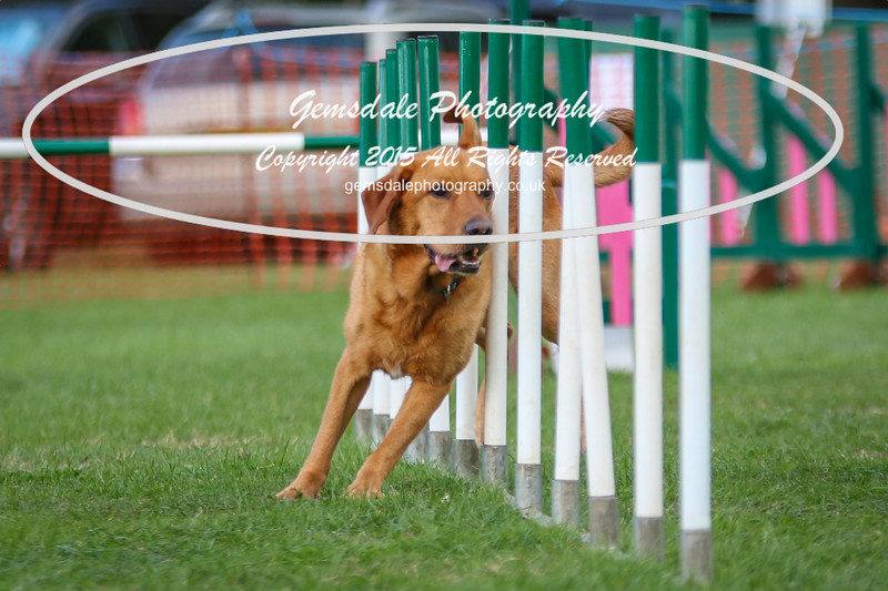 Southdowns Agility 25th September 2016-3019