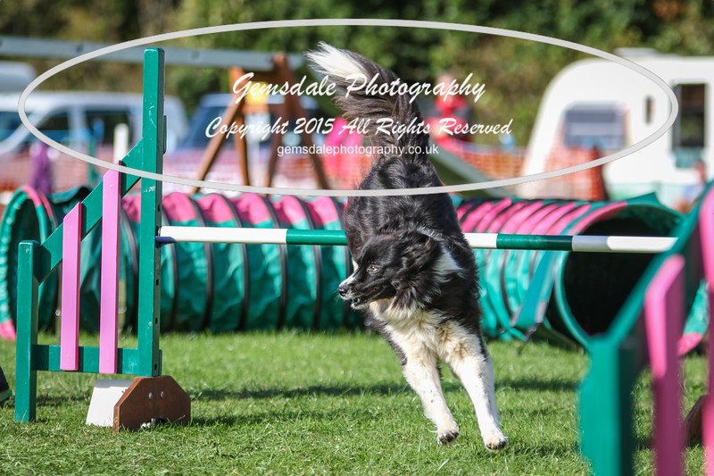 Southdowns Agility 25th September 2016-3050