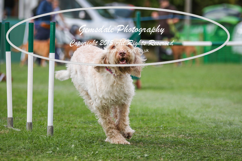 Southdowns Agility 25th September 2016-3001