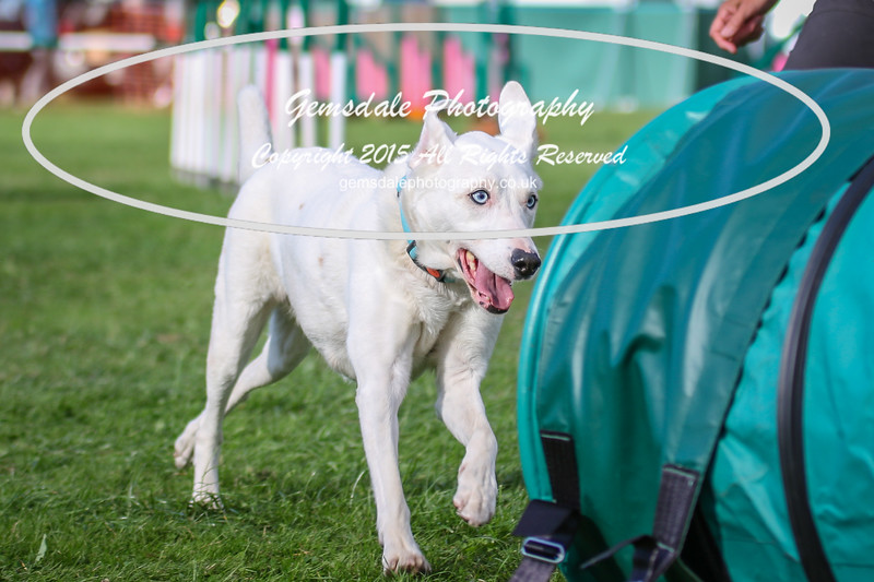 Southdowns Agility 25th September 2016-3017