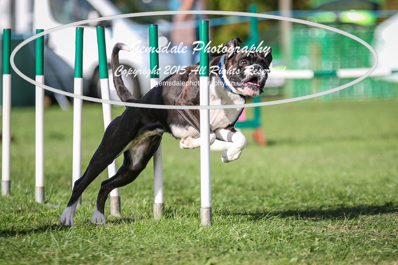 Southdowns Agility 25th September 2016-3053