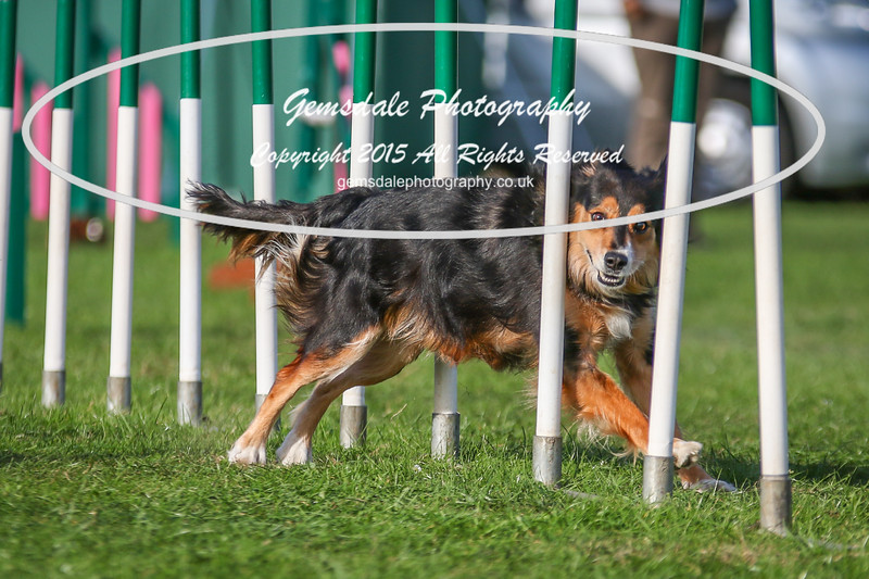 Southdowns Agility 25th September 2016-3092