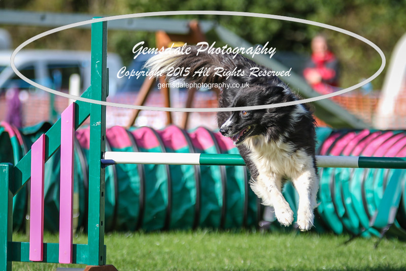 Southdowns Agility 25th September 2016-3049