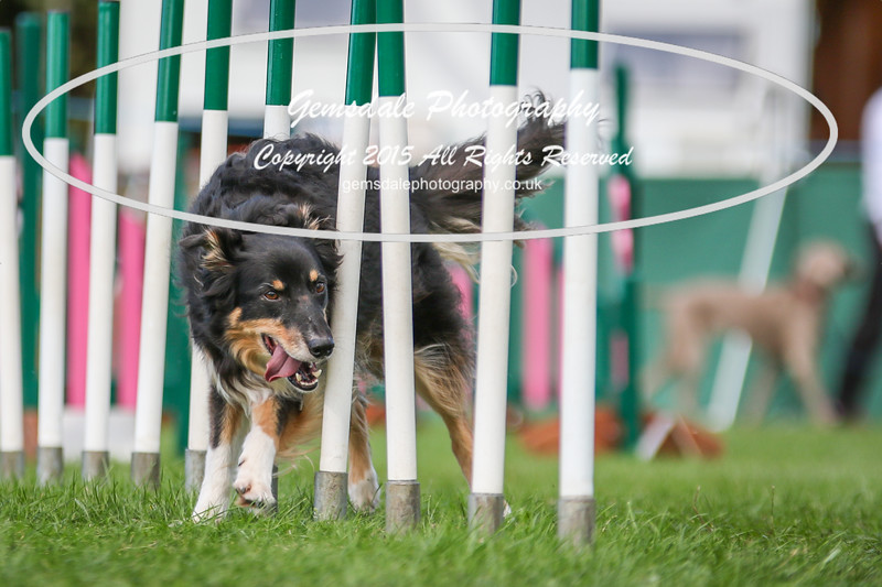 Southdowns Agility 25th September 2016-3012
