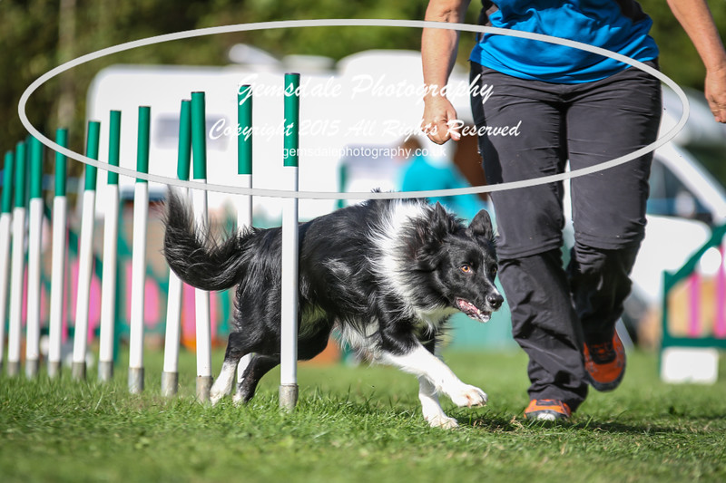 Southdowns Agility 25th September 2016-3011