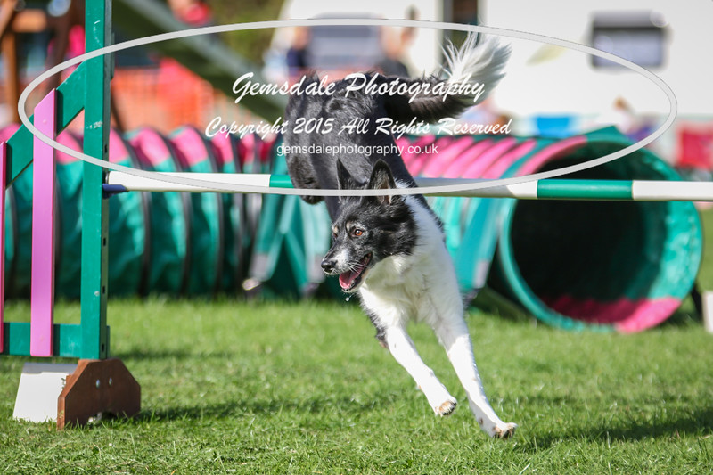 Southdowns Agility 25th September 2016-3044