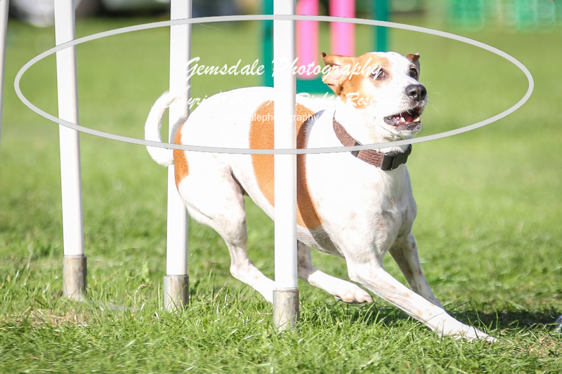 Southdowns Agility 25th September 2016-3046