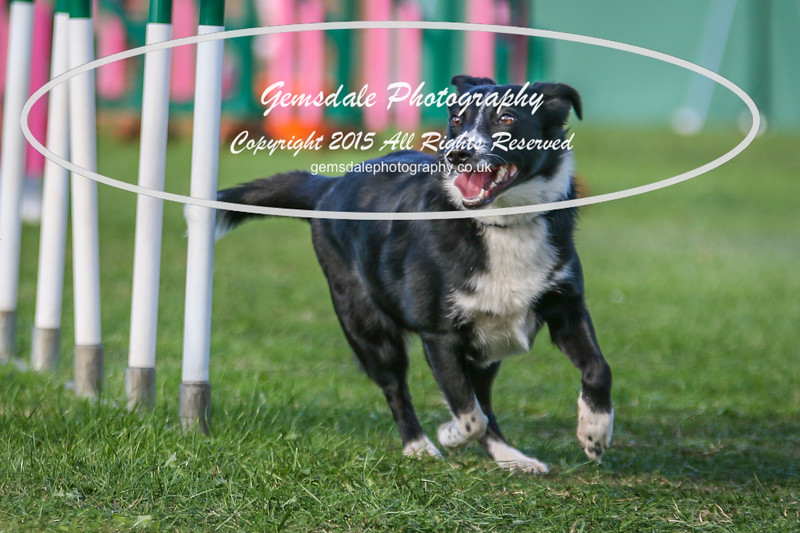 Southdowns Agility 25th September 2016-3032