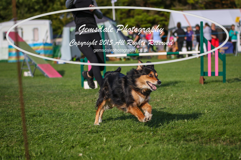 Southdowns Agility 25th September 2016-3094