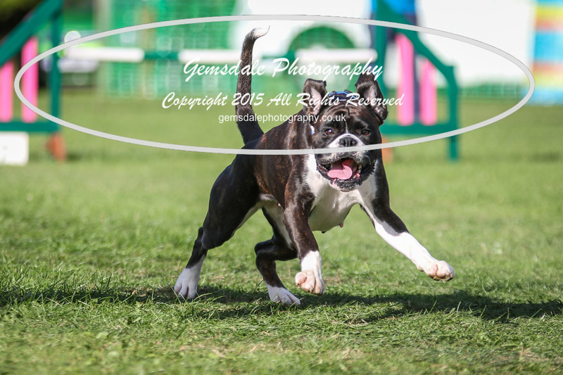 Southdowns Agility 25th September 2016-3055