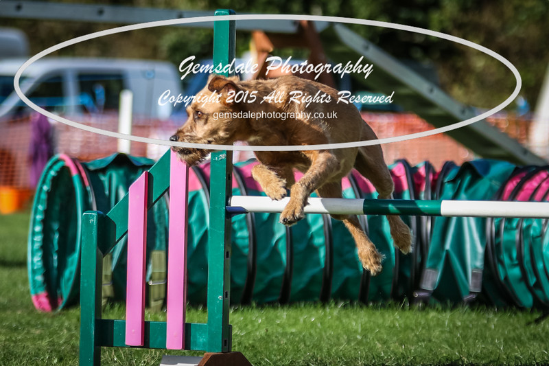 Southdowns Agility 25th September 2016-3061