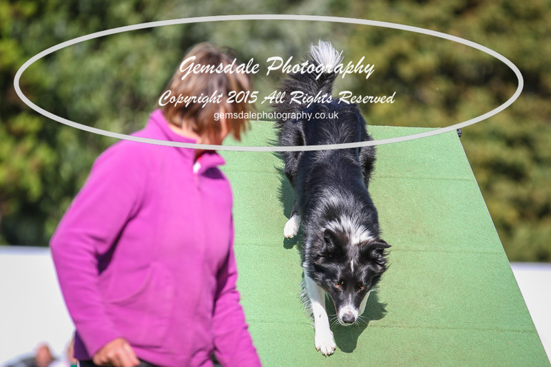 Southdowns Agility 25th September 2016-3037