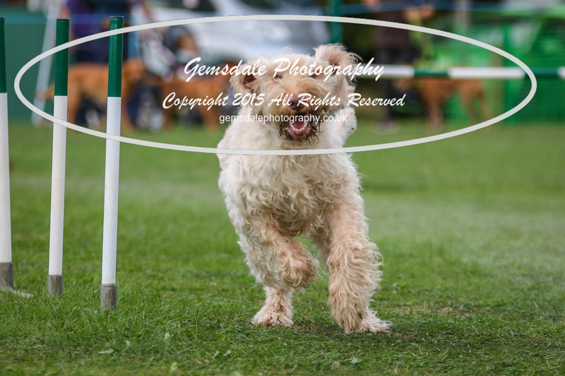 Southdowns Agility 25th September 2016-3002