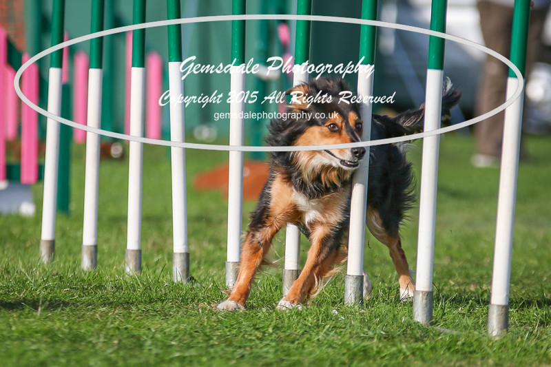 Southdowns Agility 25th September 2016-3091