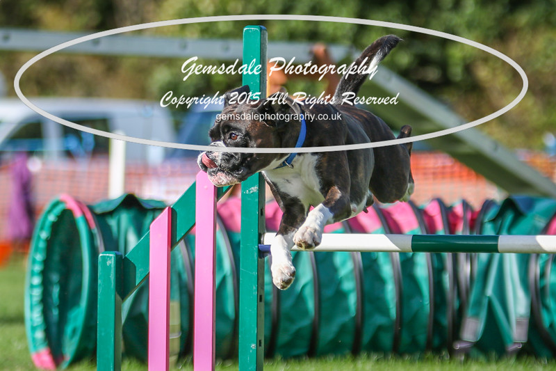 Southdowns Agility 25th September 2016-3058