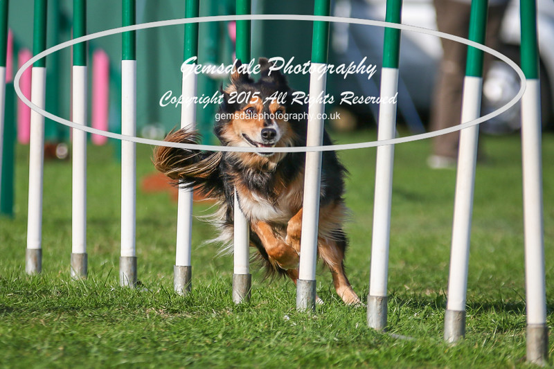 Southdowns Agility 25th September 2016-3090