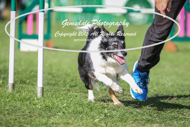 Southdowns Agility 25th September 2016-3043