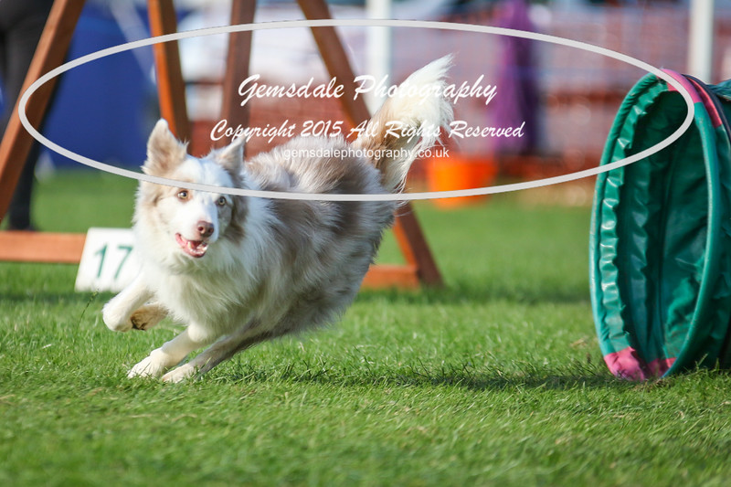 Southdowns Agility 25th September 2016-3087