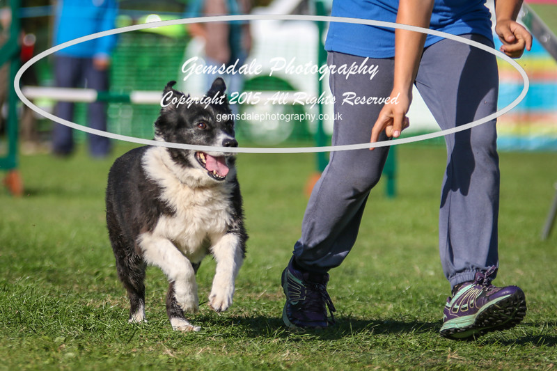 Southdowns Agility 25th September 2016-3072