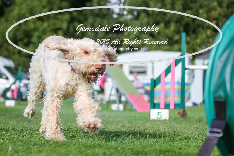 Southdowns Agility 25th September 2016-3010