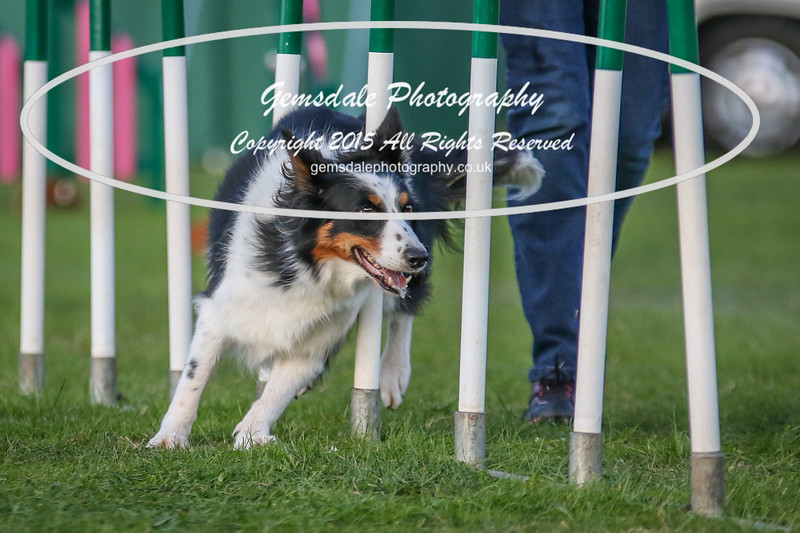 Southdowns Agility 25th September 2016-3074