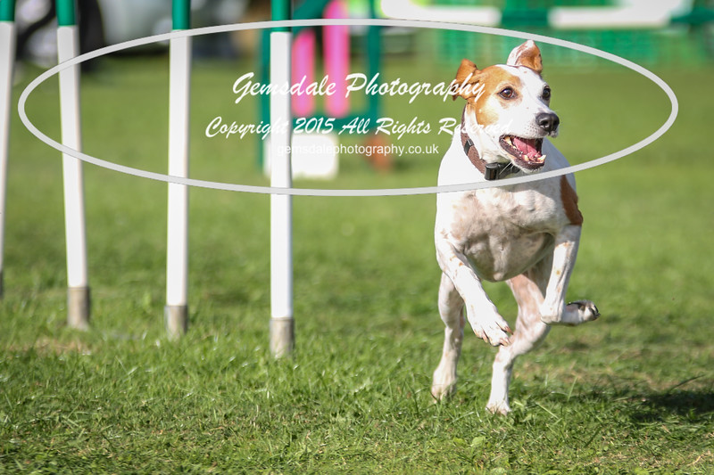 Southdowns Agility 25th September 2016-3047