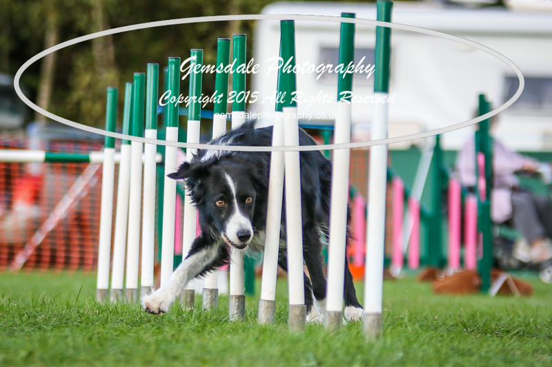 Southdowns Agility 25th September 2016-3009