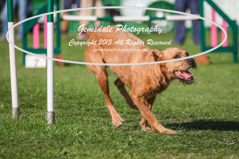 Southdowns Agility 25th September 2016-3060
