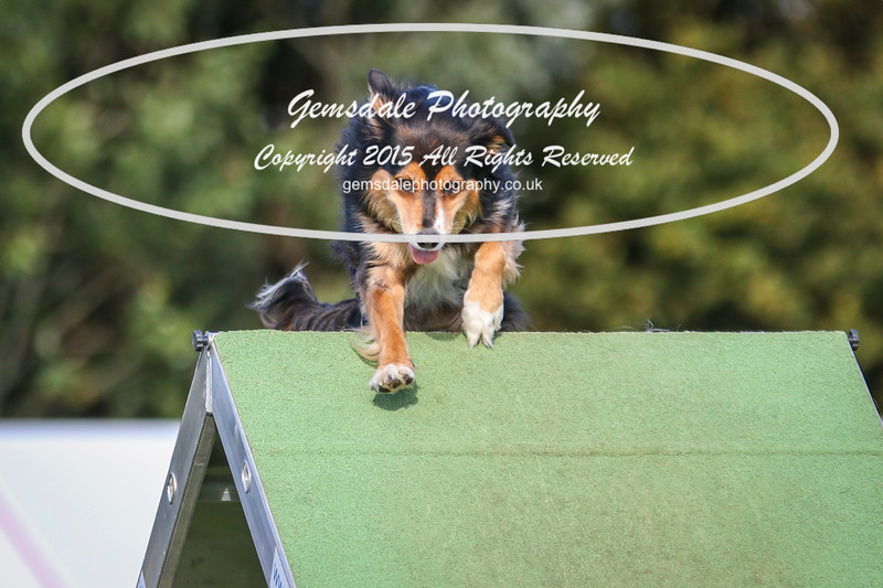 Southdowns Agility 25th September 2016-3089