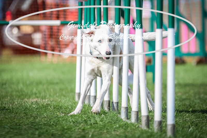 Southdowns Agility 25th September 2016-3015