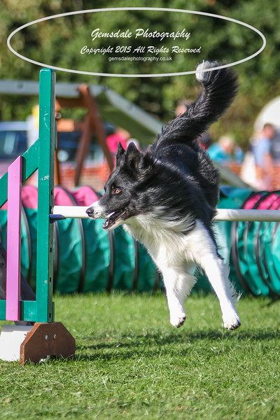 Southdowns Agility 25th September 2016-3040