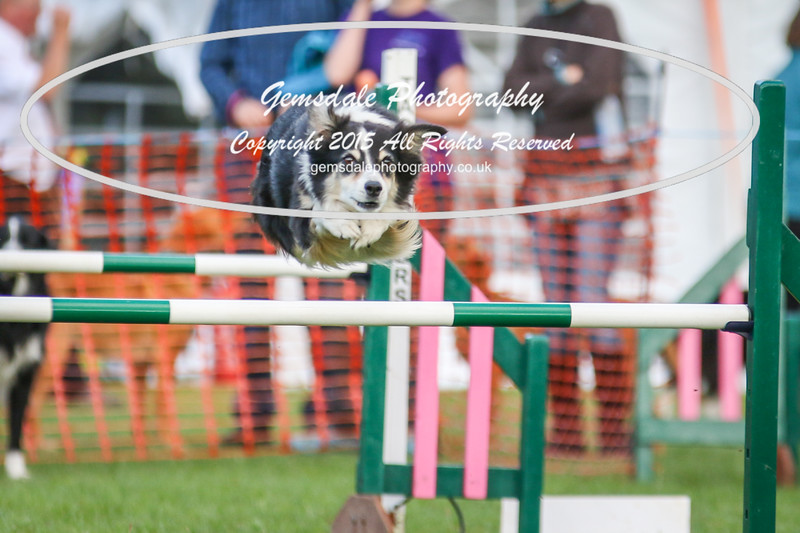 Southdowns Agility 25th September 2016-3005