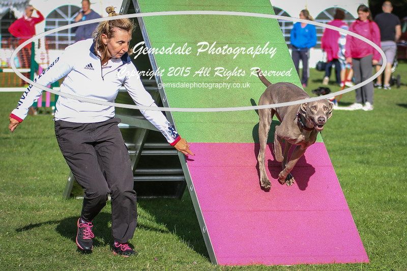 Southdowns Agility 25th September 2016-3024