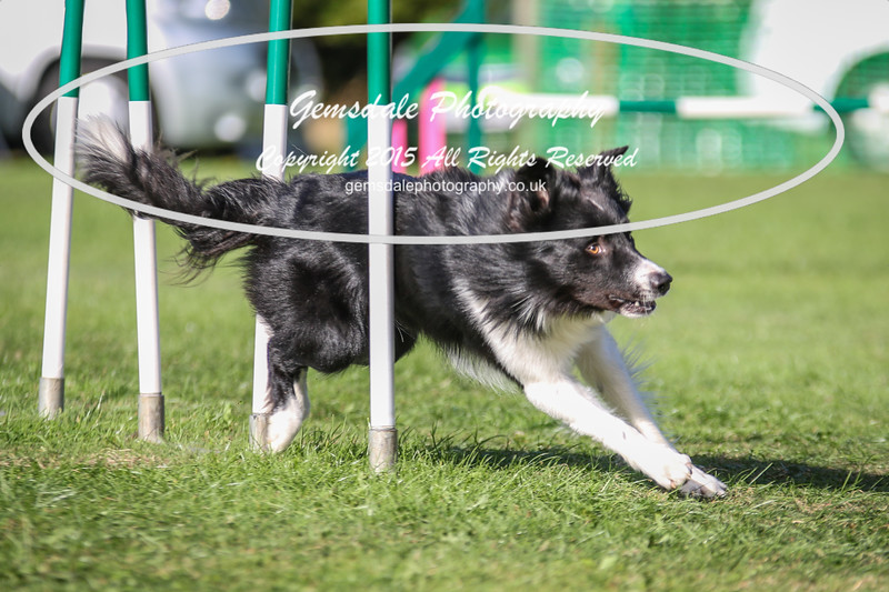 Southdowns Agility 25th September 2016-3038