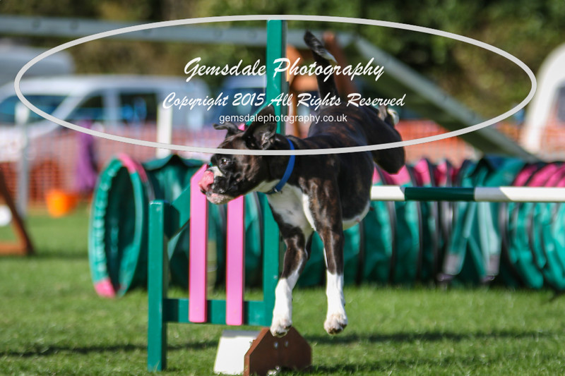 Southdowns Agility 25th September 2016-3059