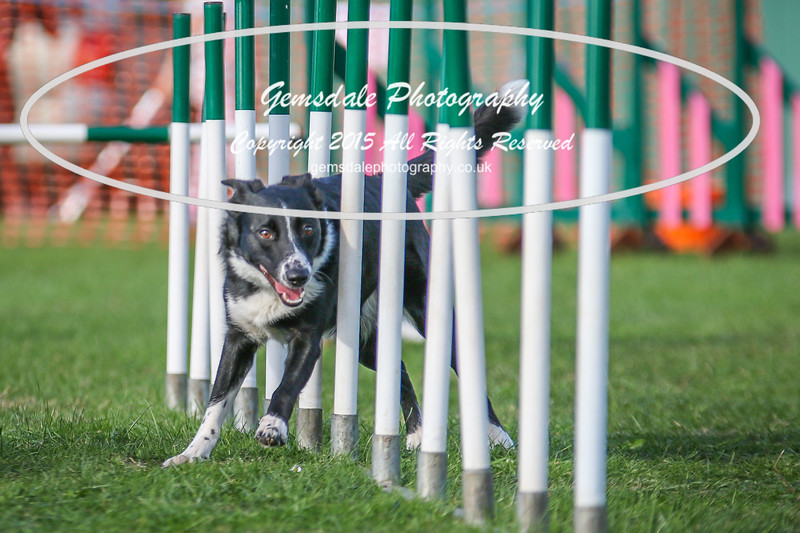 Southdowns Agility 25th September 2016-3030