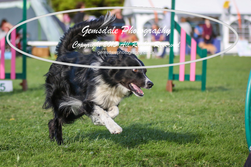 Southdowns Agility 25th September 2016-3079