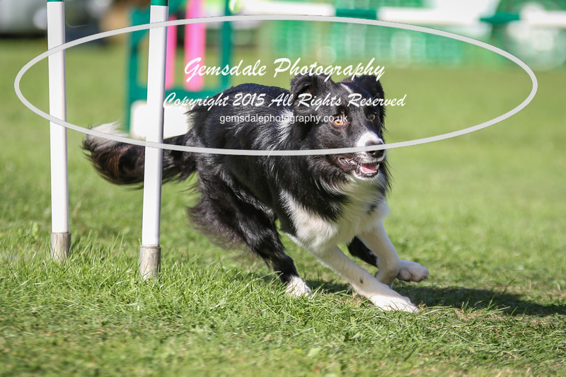 Southdowns Agility 25th September 2016-3039