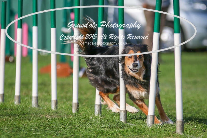 Southdowns Agility 25th September 2016-3093