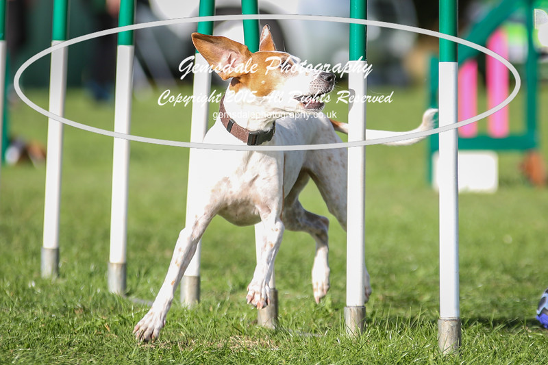 Southdowns Agility 25th September 2016-3045