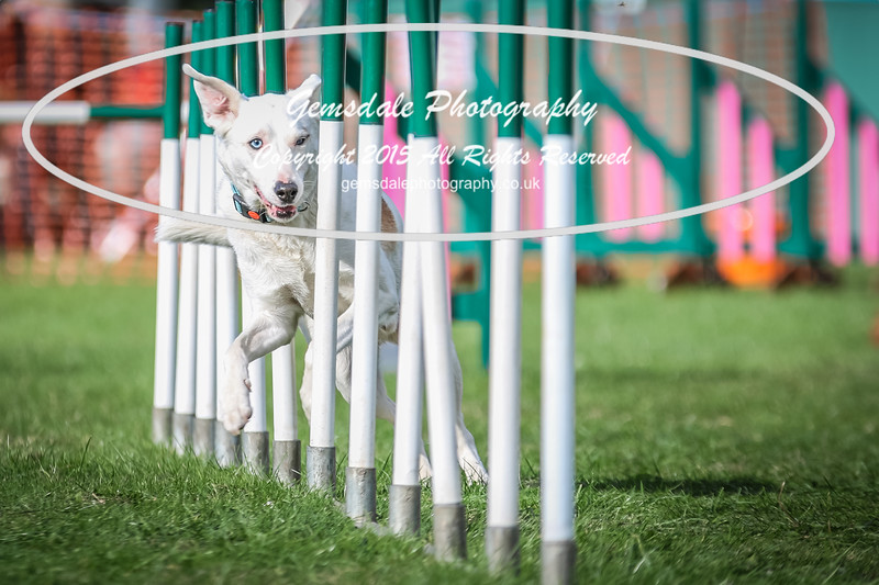 Southdowns Agility 25th September 2016-3014