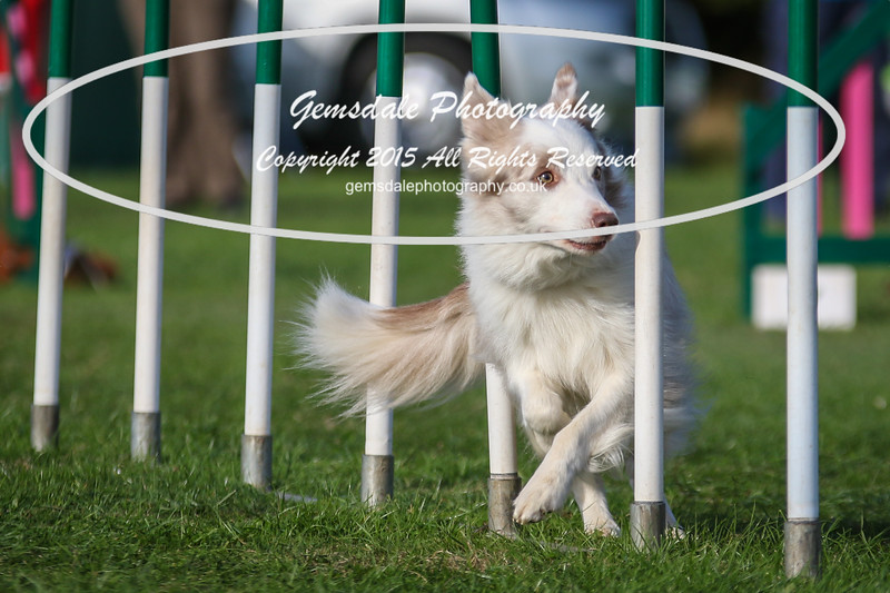 Southdowns Agility 25th September 2016-3085
