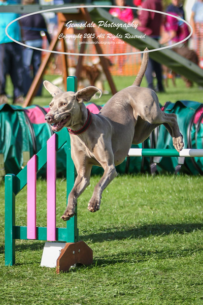 Southdowns Agility 25th September 2016-3026