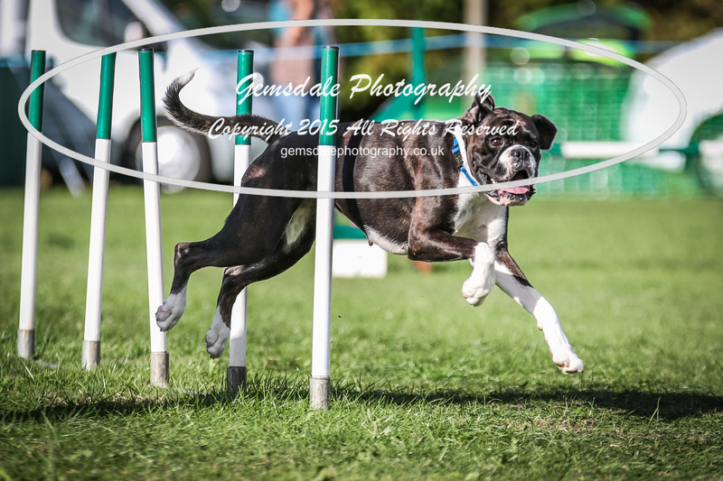 Southdowns Agility 25th September 2016-3054